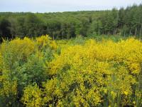 Au plus près : la Forêt de Saint-Sever