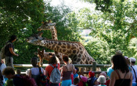 Sortie au zoo de Champrepus