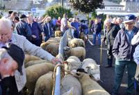 La foire aux moutons de Saint-Sever